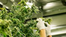Could Tilray's Q2 Results Boost Its Stock Price?