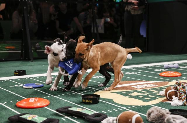 Animal Planet offers a look at the Puppy Bowl in VR (updated)