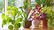 This nifty gadget will keep your house plants alive without you having to worry
