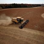 U.S. confirms China soybean sale, but size disappoints