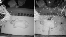 'A bad dream': Terrifying moment tree crashes into baby's room