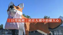 【黃色小鴨新作】荷蘭藝術家霍夫曼新作「巨型狐狸」 站在人潮中治癒人心