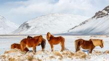 Iceland announces quarantine-free travel if you've had COVID-19