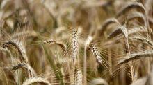 Mondelez, Kraft settle wheat price manipulation case