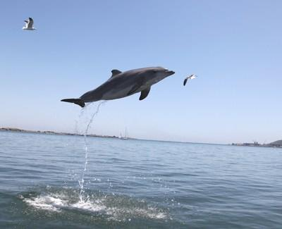 25-Year Dolphin Health Study Reveals Factors Contributing to Slow and Accelerated Aging Rates in Long-Lived Mammals