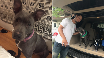 Pitching in: Darvish rescues adorable dog