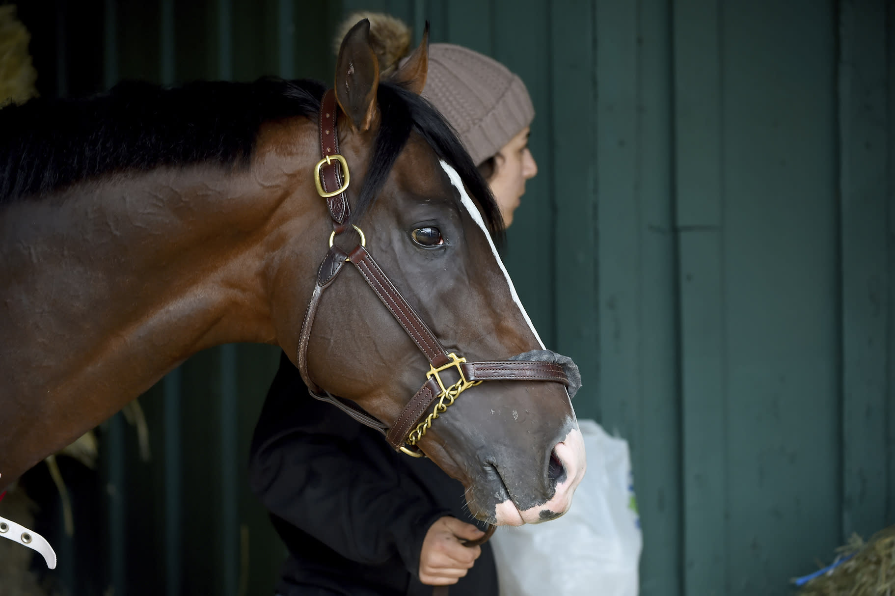 Preakness contender War of Will is led through the barn, Tuesday, May 14, 2019, at Pimlico Race Course in Baltimore. The Preakness Stakes horse race is scheduled to take place Saturday, May 18. (AP Photo/Will Newton)