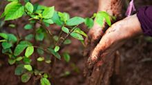 Why Planting a TrillionTrees ShouldStartWith Small Farmers