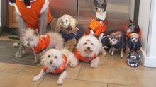 Steve rescata perros muy ancianos y les da un hogar para siempre