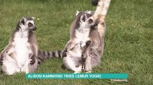 Alison Hammond leaves 'This Morning' fans feeling 'jealous' as she tries out lemur yoga