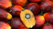 Malaysia worries new EU food rules could hurt palm oil exports