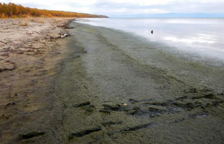 Lake Baikal has been suffering from increased algae growth, a boom in tourism, and the effects of forest fires in the surrounding wilderness for many years