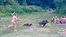 Naked man chases down wild boar that stole his bag