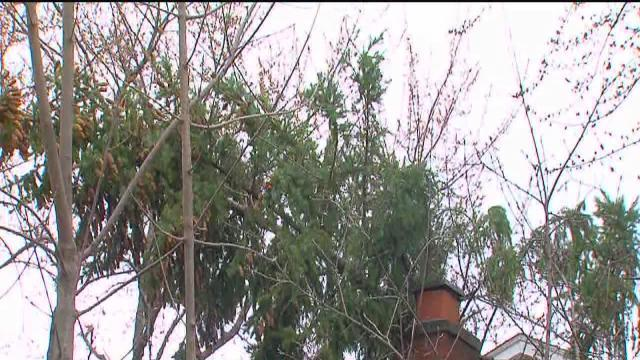 Wind damage in Troy, Birmingham