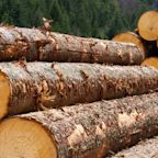 Acadian Timber Corp.'s (TSE:ADN) On An Uptrend But Financial Prospects Look Pretty Weak: Is The Stock Overpriced?