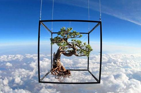 Inhabitat's Week in Green: bonsai in space, rising sea levels and the blood of horseshoe crabs