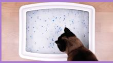 What is kitty litter made of and is it safe for your cat?