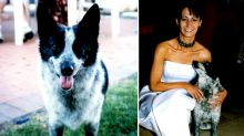 'My world fell apart': The dark and hidden toll of losing 'just' a pet