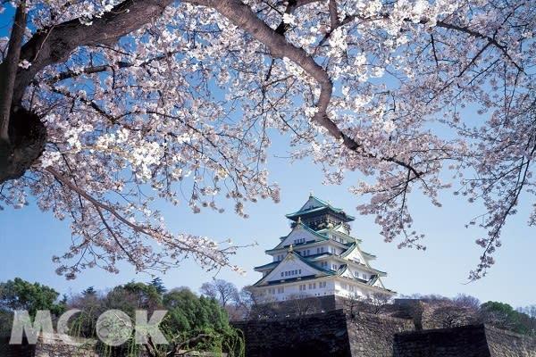 大阪城的櫻花春季滿開,動人的美景是許多追櫻一族熱愛前往賞櫻的景點。(圖片提供/JR西日本台灣推廣事務所,以下同)