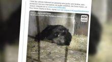 Captivité animale : l'ours Micha ne pourra plus jamais être présenté dans le cadre de spectacles