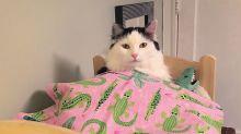 Após ser resgatada, gatinha faz sucesso dormindo em miniatura de cama