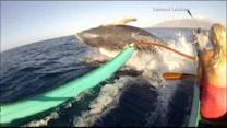 Canoe passengers get a whale-sized surprise in Maui