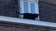 Una pantera è entrata in un appartamento nel Nord della Francia