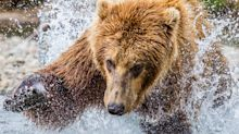 Recent rally could be a 'bear market trap:' Miller Tabak strategist