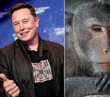 Elon Musk's Neuralink scientists are not the first to get a monkey to control a computer with its mind