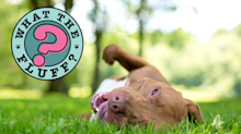 Why Do Dogs Roll Around in Stinky Stuff?