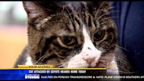 Cat attacked by coyote returns home