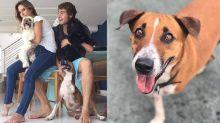 """Tatá Werneck lamenta morte de cão e desabafa: """"Gravo segurando o choro"""""""