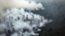 Greenpeace acusa a la papelera APP destruir turberas tropicales en Indonesia