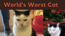 There's Paw-Some News About The 'World's Worst Cat'