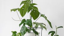 We Found Plenty Of Plant Stands Under $50 For The Proud Plant Parent