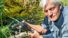 Brandenburg: Trockenheit und Waschbären gefährden Schildkröten-Projekt