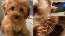 'How dangerous': Warning after dog is 'impaled' on Kmart item