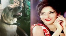 Ankita Lokhande playing with her dog Hatchi video goes viral