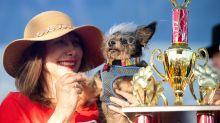 Cachorrinho eleito o mais feio do mundo ganha R$ 11 mil em concurso