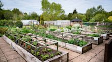 Community gardeners: how to apply for an NGS award
