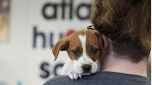 Atlanta Humane Society campus could be redeveloped with hundreds of apartments, new office space