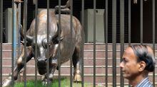 Stock-market bulls lose security blanket as junk bonds suffer, economist says
