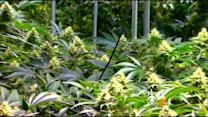 State Reaches Agreement To Legalize Medical Marijuana