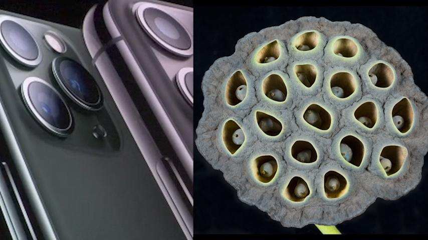 What Is Trypophobia And Why Are Sufferers Being Triggered By