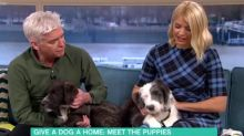 Holly Willoughby reduced to tears twice on 'This Morning'