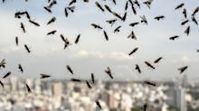Flying Ant Day: What is it, when is it and how to get rid of the pesky insects