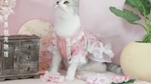 """Popular Han-styled pet apparel designer on starting her own business: """"I can't find pet clothes that I liked"""""""
