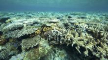 Coral bleaching found at 'healthy' WA reef