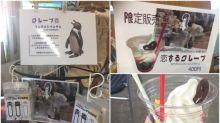 日本企鵝爺爺愛上《動物朋友》 動物園抽水出苦戀特飲