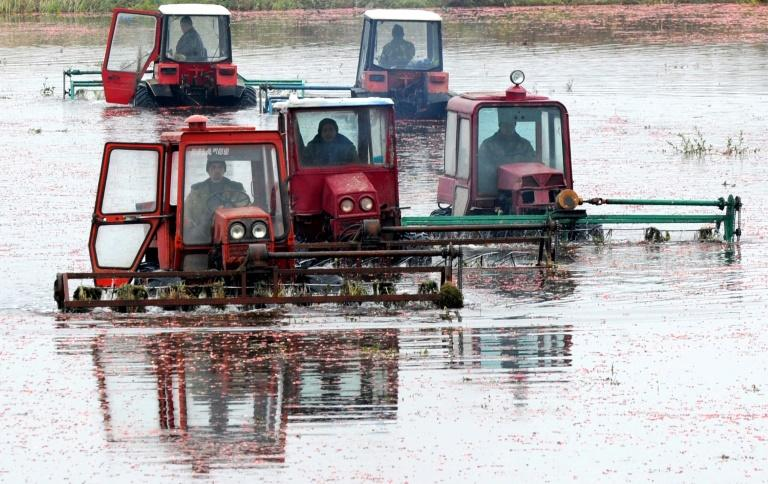 Lukashenko, a former collective farm director, likes to emphasise his connection to the land